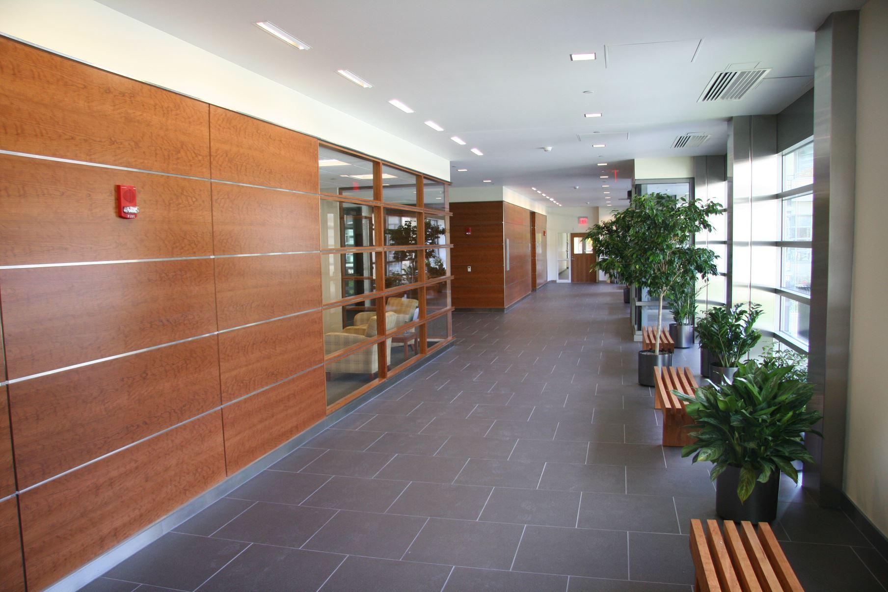 WPI East Residence Hall Tree Hallway